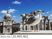 Купить «Чайка на фоне руин римского форума в Риме, Италия», фото № 26965462, снято 12 сентября 2017 г. (c) Наталья Волкова / Фотобанк Лори