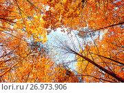 Autumn background. Autumn trees extending the sky. Autumn forest landscape, фото № 26973906, снято 23 сентября 2017 г. (c) Зезелина Марина / Фотобанк Лори