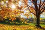 Bright autumn maple tree, фото № 26981870, снято 4 октября 2016 г. (c) Sergey Borisov / Фотобанк Лори