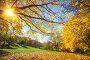 Sunny autumn in countryside, фото № 26981878, снято 5 октября 2016 г. (c) Sergey Borisov / Фотобанк Лори