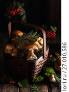 Mushrooms in the basket. Стоковое фото, фотограф Оксана Голева / Фотобанк Лори