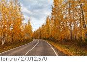 Купить «Путешествия по осеннему лесу. Пожелтевшие березы вдоль дороги», фото № 27012570, снято 25 сентября 2017 г. (c) Виктория Катьянова / Фотобанк Лори