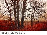 Купить «Autumn forest landscape. Autumn trees in foggy weather», фото № 27028210, снято 20 ноября 2017 г. (c) Зезелина Марина / Фотобанк Лори
