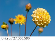 Купить «Солнечные георгины на фоне голубого неба. Фокус на переднем плане», эксклюзивное фото № 27060590, снято 8 октября 2017 г. (c) Svet / Фотобанк Лори