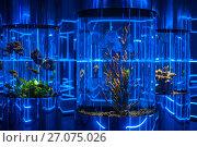 Купить «oceanarium interior photo», фото № 27075026, снято 10 июня 2017 г. (c) Jan Jack Russo Media / Фотобанк Лори
