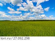 Купить «Green wheat field under beautiful cloudy sky», фото № 27092298, снято 18 июня 2017 г. (c) Володина Ольга / Фотобанк Лори