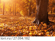 Купить «Autumn forest landscape. Fallen autumn leaves covering the ground and forest autumn trees», фото № 27094182, снято 6 октября 2017 г. (c) Зезелина Марина / Фотобанк Лори