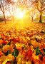 Sunny autumn maples in the park, фото № 27134242, снято 22 октября 2017 г. (c) Sergey Borisov / Фотобанк Лори