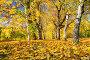 Sunny autumn in the park, фото № 27134278, снято 4 октября 2016 г. (c) Sergey Borisov / Фотобанк Лори