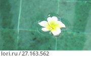 Купить «Symbol of tropical rest-flowers frangipani (plumeria) floating in the water pool. The spa pool. Bali. Indonesia.Peace and tranquility», видеоролик № 27163562, снято 2 сентября 2009 г. (c) Куликов Константин / Фотобанк Лори
