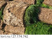 Купить «The rolled lawn folded in stacks outdoors», фото № 27174742, снято 2 ноября 2017 г. (c) Володина Ольга / Фотобанк Лори