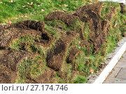 Купить «The rolled lawn folded in stacks on street», фото № 27174746, снято 2 ноября 2017 г. (c) Володина Ольга / Фотобанк Лори
