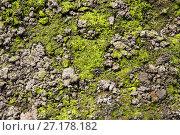 Купить «Moss and lichen on stone», фото № 27178182, снято 30 апреля 2016 г. (c) Евгений Ткачёв / Фотобанк Лори