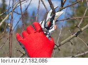 Купить «Обрезка плодовых деревьев весной на дачном участке», эксклюзивное фото № 27182086, снято 26 марта 2017 г. (c) Елена Коромыслова / Фотобанк Лори