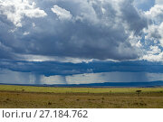 Купить «Rainstorm  clearing over savannah at the boundary of the Masai Mara National Reserve and Serengeti National Park with Blue wildebeest (Connochaetes taurinus...», фото № 27184762, снято 21 июля 2018 г. (c) Nature Picture Library / Фотобанк Лори