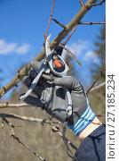Купить «Обрезка плодовых деревьев весной на дачном участке», эксклюзивное фото № 27185234, снято 26 марта 2017 г. (c) Елена Коромыслова / Фотобанк Лори