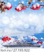 Купить «Зимний фон с заснеженной рябиной», фото № 27193922, снято 5 ноября 2016 г. (c) Икан Леонид / Фотобанк Лори