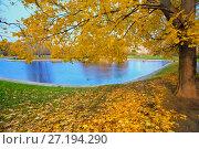 Купить «Осенний пейзаж в городском парке с золотым кленом и водоемом», фото № 27194290, снято 17 октября 2017 г. (c) Татьяна Белова / Фотобанк Лори