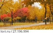 Купить «Mapple Leaves Falls in autumn park», видеоролик № 27196994, снято 10 ноября 2017 г. (c) Илья Шаматура / Фотобанк Лори
