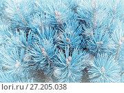 Купить «Winter background. Winter pine tree branches under winter snowfall», фото № 27205038, снято 13 августа 2016 г. (c) Зезелина Марина / Фотобанк Лори
