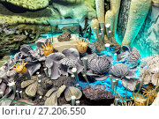Купить «The underwater marine world. Corals and sea sponges», фото № 27206550, снято 31 января 2015 г. (c) Евгений Ткачёв / Фотобанк Лори
