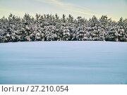 Купить «Row of young spruse trees covered with snow at New Year eve», фото № 27210054, снято 7 января 2017 г. (c) Георгий Дзюра / Фотобанк Лори