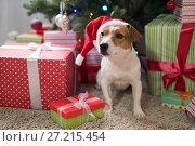 Купить «Dog breed Jack Russell under the Christmas tree», фото № 27215454, снято 18 ноября 2017 г. (c) Типляшина Евгения / Фотобанк Лори