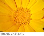 Купить «Yellow flower, macro», фото № 27218410, снято 26 июля 2014 г. (c) Надежда Болотина / Фотобанк Лори