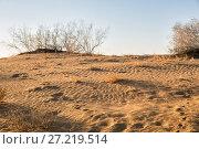 Купить «Sands of the Kyzylkum desert at sunset», фото № 27219514, снято 20 октября 2016 г. (c) Юлия Бабкина / Фотобанк Лори
