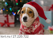 Купить «Dog breed Jack Russell under the Christmas tree», фото № 27220722, снято 18 ноября 2017 г. (c) Типляшина Евгения / Фотобанк Лори