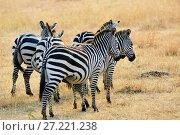 Купить «African wildlife, Kenya», фото № 27221238, снято 21 августа 2010 г. (c) Знаменский Олег / Фотобанк Лори