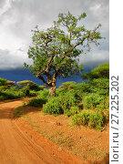 Купить «Road and Sausage tree Kigelia africana in Tanzania, Africa», фото № 27225202, снято 21 января 2008 г. (c) Знаменский Олег / Фотобанк Лори