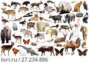 Купить «animal collection asia», фото № 27234886, снято 18 ноября 2018 г. (c) Яков Филимонов / Фотобанк Лори