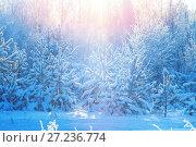 Купить «Winter bright landscape with coniferous snow-covered forest in the sun», фото № 27236774, снято 19 ноября 2017 г. (c) Икан Леонид / Фотобанк Лори