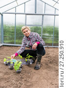 Купить «Happy cheerful woman with cucumber sprouts stands inside the greenhouse», фото № 27250910, снято 14 июня 2014 г. (c) Евгений Ткачёв / Фотобанк Лори