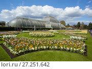Купить «Palm House, with flowering Tulips (Tulipa) in the foreground, Kew Gardens, London, England, UK, April 2016.», фото № 27251642, снято 19 августа 2018 г. (c) Nature Picture Library / Фотобанк Лори