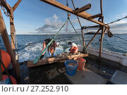 Купить «Fishermen harvesting scallops from a scallop dredge on a scallop boat. Cousins Island, Maine, USA, January. Model released.», фото № 27252910, снято 24 мая 2018 г. (c) Nature Picture Library / Фотобанк Лори