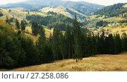 Купить «Picturesque lawns of Karpaty on Bucovina in Romania.», видеоролик № 27258086, снято 7 октября 2017 г. (c) Яков Филимонов / Фотобанк Лори