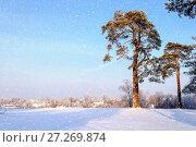 Купить «Winter landscape. Frosty high pine winter trees in winter forest and houses on the background. Winter rural scene», фото № 27269874, снято 7 декабря 2017 г. (c) Зезелина Марина / Фотобанк Лори