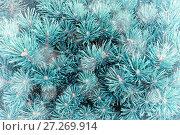 Купить «Winter background. Pine tree branches under winter snowfall, closeup winter forest nature», фото № 27269914, снято 13 августа 2016 г. (c) Зезелина Марина / Фотобанк Лори