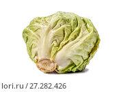 Купить «Head of cabbage with drops of water on a white background», фото № 27282426, снято 21 декабря 2015 г. (c) Евгений Ткачёв / Фотобанк Лори