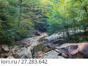 Купить «Горная река в лесу», фото № 27283642, снято 27 сентября 2017 г. (c) виктор химич / Фотобанк Лори