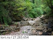 Купить «Горная река в лесу», фото № 27283654, снято 27 сентября 2017 г. (c) виктор химич / Фотобанк Лори