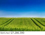 Купить «Сельский пейзаж Тосканы, Италия», фото № 27286390, снято 14 мая 2014 г. (c) Наталья Волкова / Фотобанк Лори