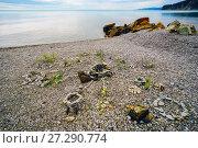 Купить «Figures of pebbles on the beach», фото № 27290774, снято 20 июня 2017 г. (c) Алексей Маринченко / Фотобанк Лори