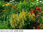 Купить «Lush landscaped garden», фото № 27294434, снято 15 июля 2017 г. (c) Алексей Дмецов / Фотобанк Лори