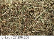 Купить «Фон: Сухая трава», фото № 27296266, снято 26 августа 2017 г. (c) Литвяк Игорь / Фотобанк Лори