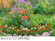 Купить «Цветы на клумбе в саду», эксклюзивное фото № 27309062, снято 9 сентября 2017 г. (c) Елена Коромыслова / Фотобанк Лори