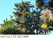 Купить «Blossoming cactus plant.», фото № 27321846, снято 14 июня 2017 г. (c) Юрий Брыкайло / Фотобанк Лори