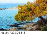 Sunset Aegean sea coast (Chalkidiki, Greece). (2016 год). Стоковое фото, фотограф Юрий Брыкайло / Фотобанк Лори